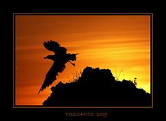 Untitled photo by tozofoto