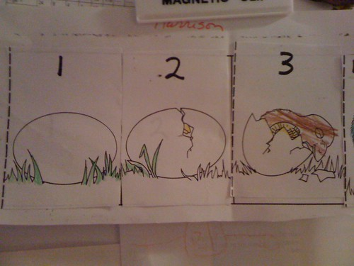 Chicken Birth Cycle