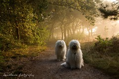 foggy morning dogs photo by dewollewei