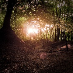 End of Day in the Enchanted Forest photo by Gilderic Photography