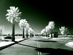 Walk to work (deep infrared) photo by Mauro Luna