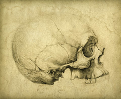 Skull study drawing photo by Yaroslav Gerzhedovich