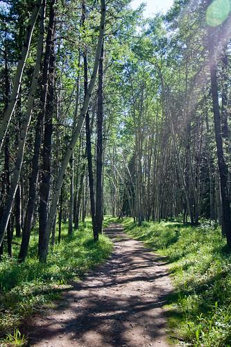 Troll Falls Trail