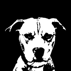 Pitbull Black & White Stencil Dog Art Print photo by Pupaya