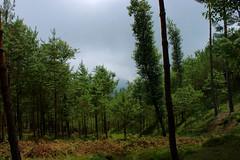 reforestacion_05