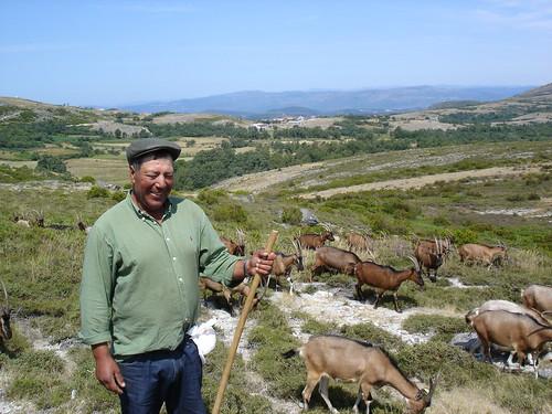 O pastor e as suas cabras photo by joão branco