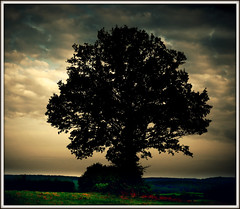 593 Tree - Silhouette photo by Nebojsa Mladjenovic
