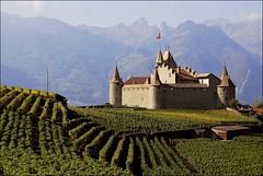 Aigle,château entouré de vignes photo by jd.echenard