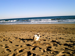 Kenzo at the beach photo by Lottie's pets & stuff