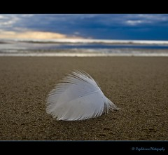 """Hope"" is the thing with feathers photo by Osgoldcross Photography"