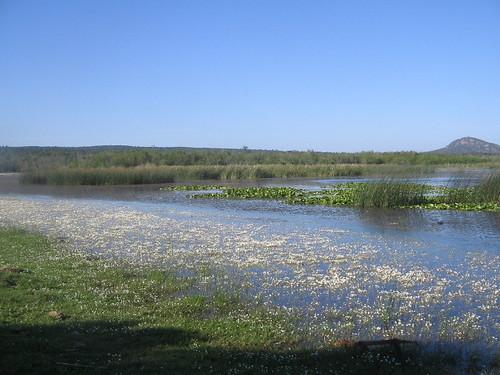 Lac Tonga