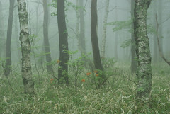 woods in mist photo by yatti(._.)