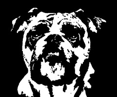 Bulldog Black & White Stencil Dog Art Print photo by Pupaya