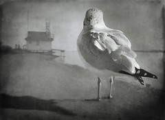aLOT_a_GuLL photo by SteveStudio.GrandPaparazzi