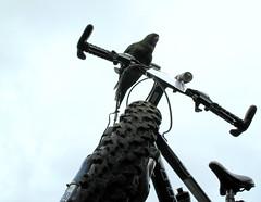 Também quero pedalar photo by kolbfilho