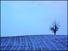 Winter on One Tree Hill photo by tina negus
