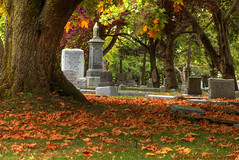 Fall Colors in Ross bay Cemetery photo by Brandon Godfrey