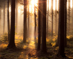 illuminated forest photo by skoeber