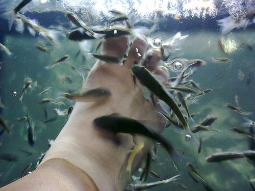 ikannya ada yang besar juga