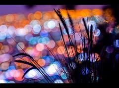 Night Lights photo by Emmanuel_D.Photography