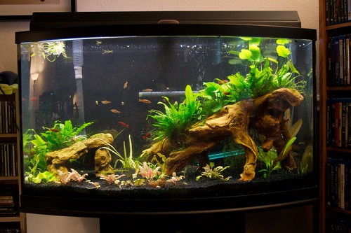Aquariums on pinterest aquarium fish tanks and betta fish for 50 gallon fish tank dimensions