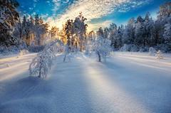 Winter Light photo by Mikko Lagerstedt
