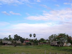 Siem Reap rice paddy