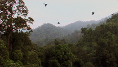 BTNP with Hornbill Flight