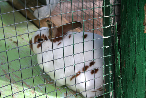 Brown-Spotted Bunny