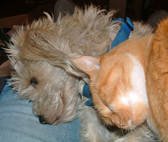 dog & cat, snuggling