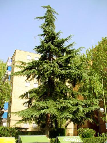 Tree 16 of 22