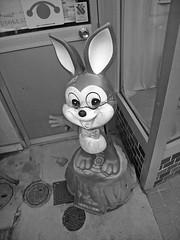 damaged rabbit