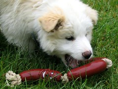 puppy-sausages-toy