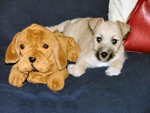 Doggie and doggie