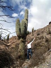 Quebrada de Humahuaca- 02 - Matt Cactus