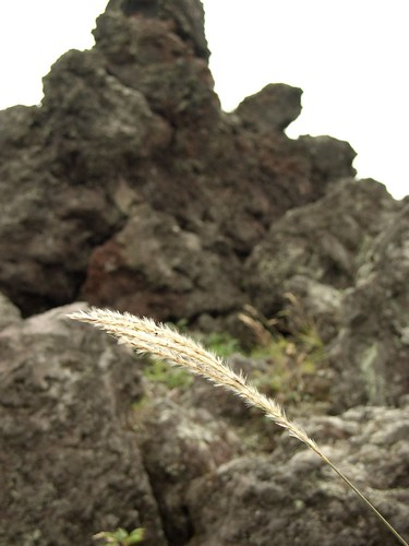 Pampas grass and rocks
