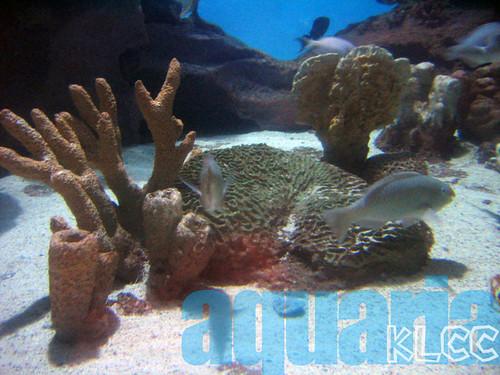 aquaria11