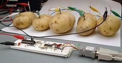 A la rica patata