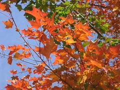 mais outono