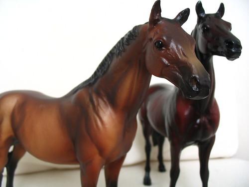 sadie's horses