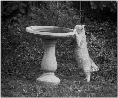 Pekoe at the birdbath
