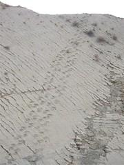 Dinosaur Tracks - 04 -