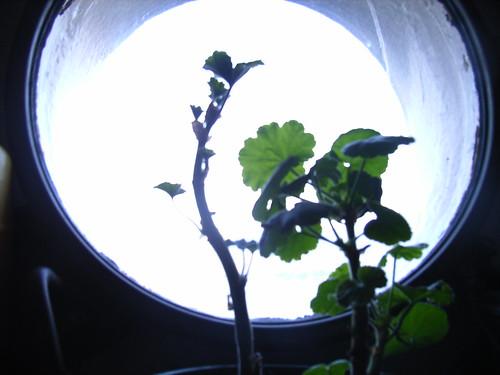 回收室的植物