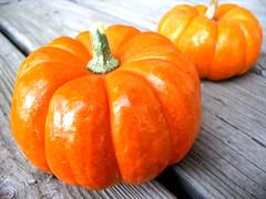pumpkins bright