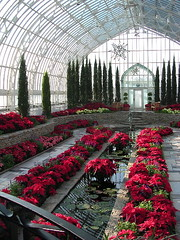 Poinsetta room