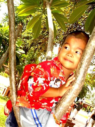 Le petit garçon dans les branches à Ayuthaya