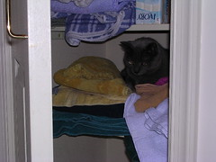 Artemis in the closet