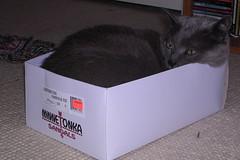 Artemis in a box