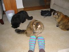 Cats Inspect Socks