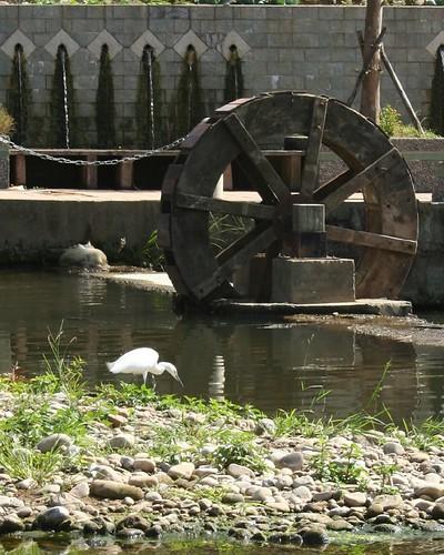 水車與白鷺鷥